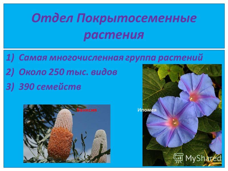 Отдел Покрытосеменные растения 1)Самая многочисленная группа растений 2)Около 250 тыс. видов 3)390 семейств Банксия Ипомея