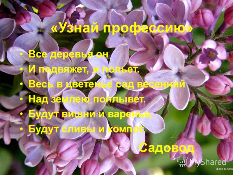«Узнай профессию» Все деревья он И подвяжет, и польет. Весь в цветенье сад весенний Над землею поплывет. Будут вишни и варенье, Будут сливы и компот.