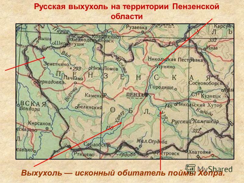 Русская выхухоль на территории Пензенской области Выхухоль исконный обитатель поймы Хопра.