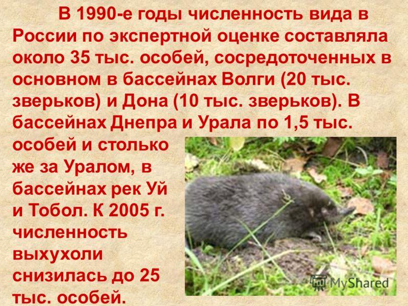 В 1990-е годы численность вида в России по экспертной оценке составляла около 35 тыс. особей, сосредоточенных в основном в бассейнах Волги (20 тыс. зверьков) и Дона (10 тыс. зверьков). В бассейнах Днепра и Урала по 1,5 тыс. особей и столько же за Ура