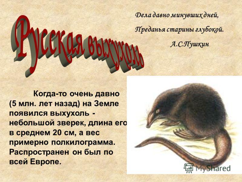 Дела давно минувших дней, Преданья старины глубокой. А.С.Пушкин Когда-то очень давно (5 млн. лет назад) на Земле появился выхухоль - небольшой зверек, длина его в среднем 20 см, а вес примерно полкилограмма. Распространен он был по всей Европе.