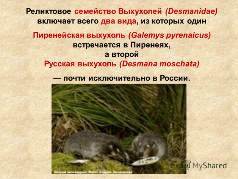 Реликтовое семейство Выхухолей (Desmanidae) включает всего два вида, из которых один Пиренейская выхухоль (Galemys pyrenaicus) встречается в Пиренеях, а второй Русская выхухоль (Desmana moschata) почти исключительно в России.