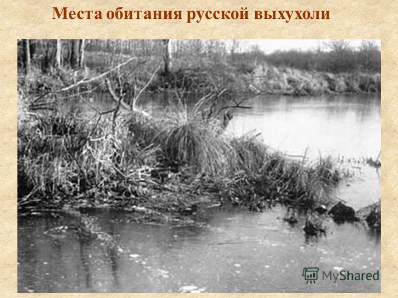 Места обитания русской выхухоли