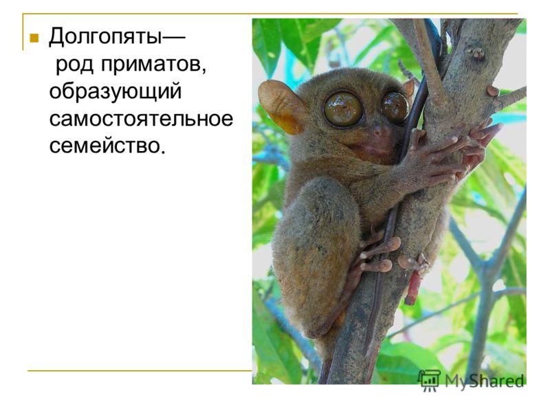 Долгопяты род приматов, образующий самостоятельное семейство.
