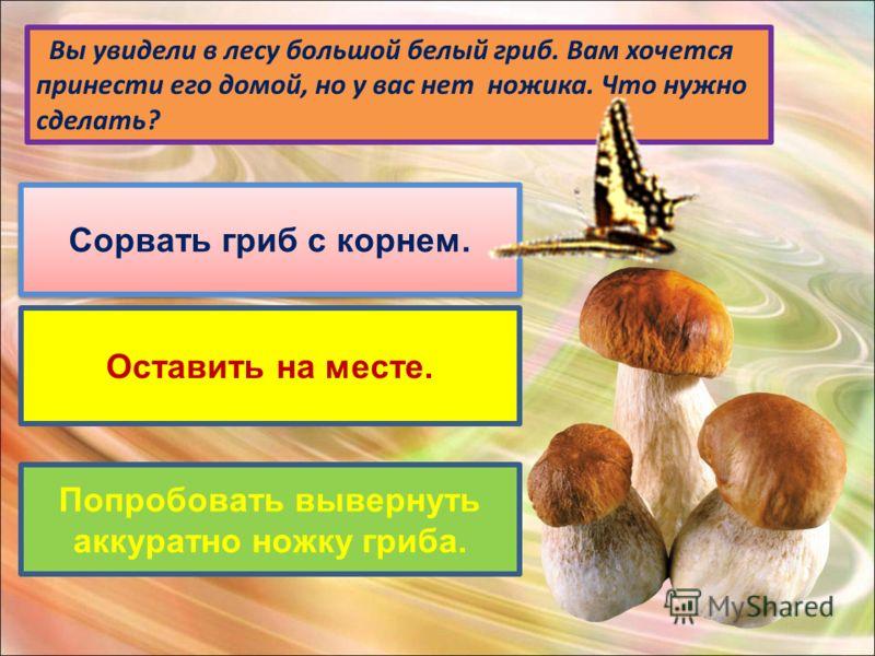 Вы увидели в лесу большой белый гриб. Вам хочется принести его домой, но у вас нет ножика. Что нужно сделать? Сорвать гриб с корнем. Оставить на месте. Попробовать вывернуть аккуратно ножку гриба.