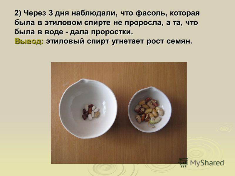 2) Через 3 дня наблюдали, что фасоль, которая была в этиловом спирте не проросла, а та, что была в воде - дала проростки. Вывод: этиловый спирт угнетает рост семян.