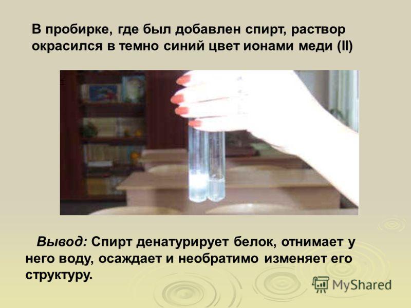 В пробирке, где был добавлен спирт, раствор окрасился в темно синий цвет ионами меди (II) Вывод: Спирт денатурирует белок, отнимает у него воду, осаждает и необратимо изменяет его структуру.