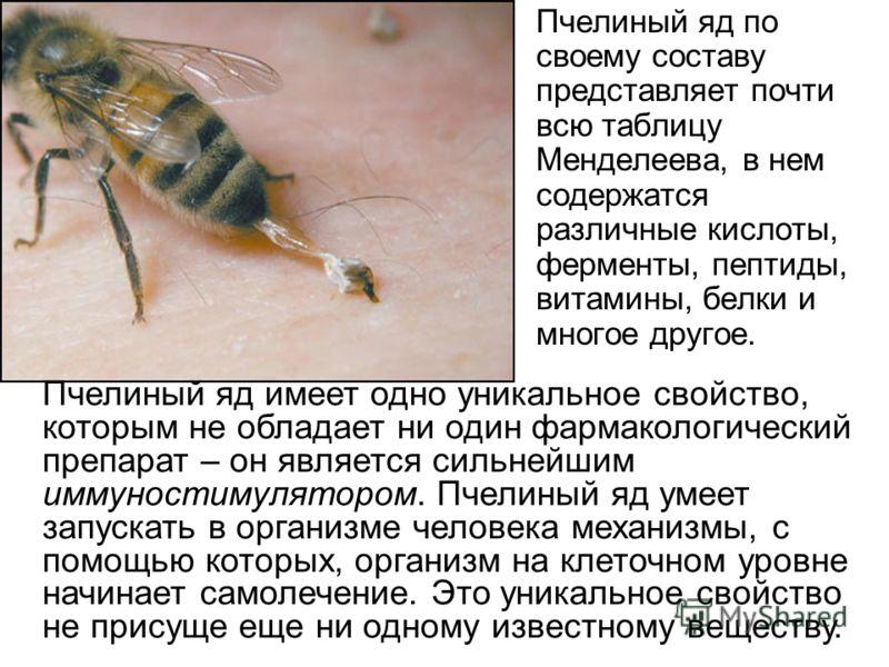 Пчелиный яд по своему составу представляет почти всю таблицу Менделеева, в нем содержатся различные кислоты, ферменты, пептиды, витамины, белки и многое другое. Пчелиный яд имеет одно уникальное свойство, которым не обладает ни один фармакологический