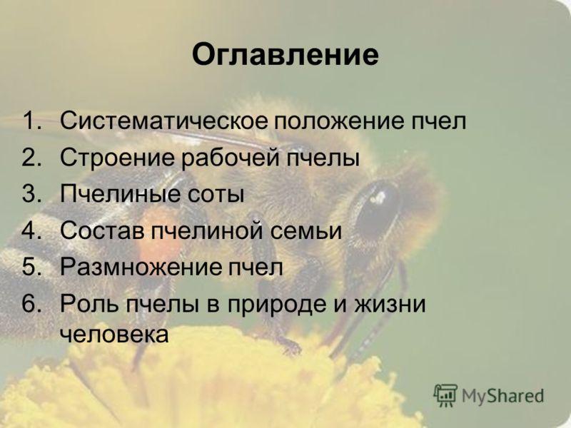 1.Систематическое положение пчел 2.Строение рабочей пчелы 3.Пчелиные соты 4.Состав пчелиной семьи 5.Размножение пчел 6.Роль пчелы в природе и жизни человека Оглавление