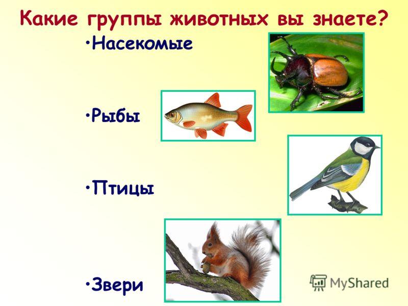 Какие группы животных вы знаете? Насекомые Рыбы Птицы Звери
