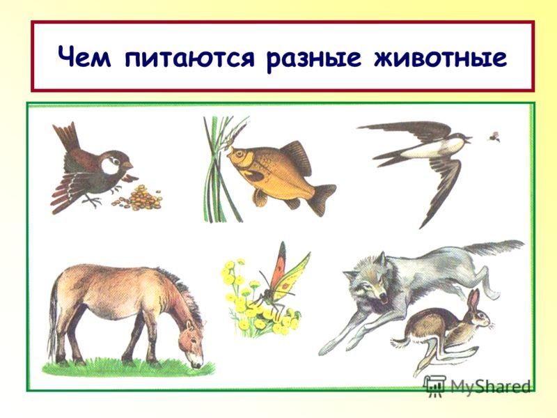 Чем питаются разные животные