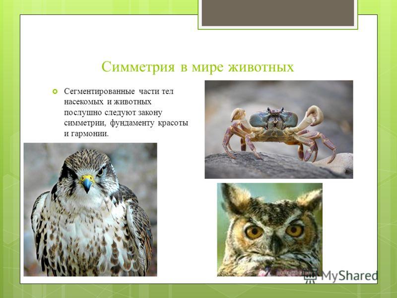 Симметрия в мире животных Сегментированные части тел насекомых и животных послушно следуют закону симметрии, фундаменту красоты и гармонии.