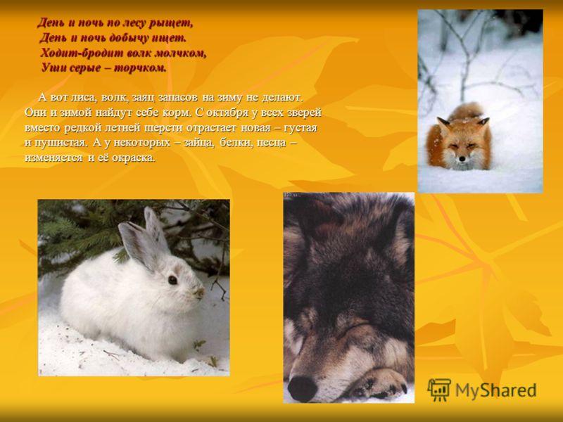 День и ночь по лесу рыщет, День и ночь по лесу рыщет, День и ночь добычу ищет. День и ночь добычу ищет. Ходит-бродит волк молчком, Ходит-бродит волк молчком, Уши серые – торчком. Уши серые – торчком. А вот лиса, волк, заяц запасов на зиму не делают.