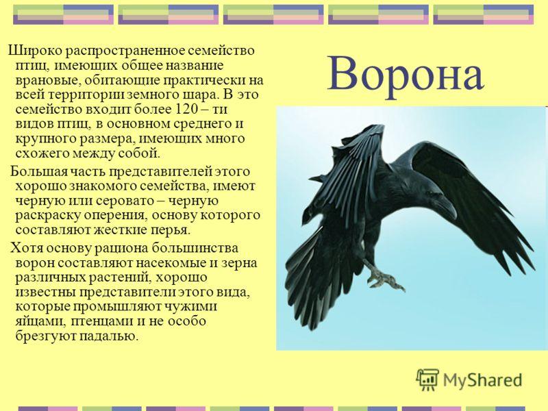 Ворона Широко распространенное семейство птиц, имеющих общее название врановые, обитающие практически на всей территории земного шара. В это семейство входит более 120 – ти видов птиц, в основном среднего и крупного размера, имеющих много схожего меж