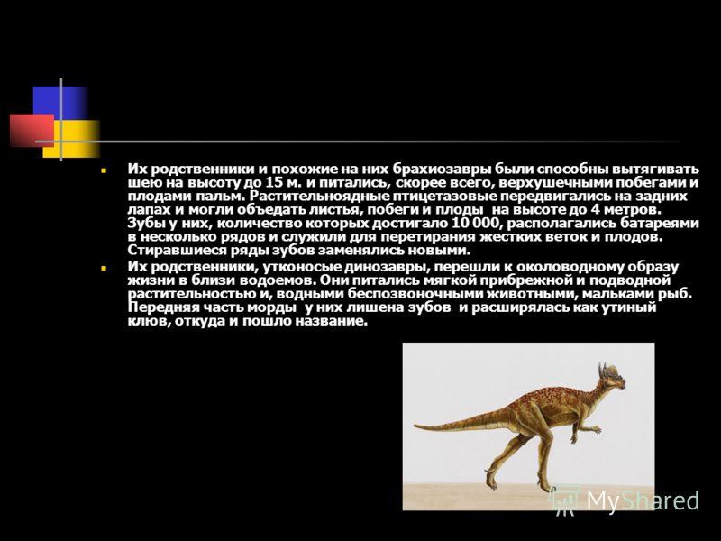 Их родственники и похожие на них брахиозавры были способны вытягивать шею на высоту до 15 м. и питались, скорее всего, верхушечными побегами и плодами пальм. Растительноядные птицетазовые передвигались на задних лапах и могли объедать листья, побеги