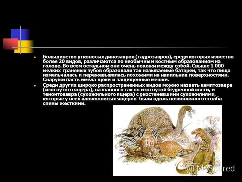 Большинство утконосых динозавров (гадрозавров), среди которых известно более 20 видов, различаются по необычным костным образованиям на голове. Во всем остальном они очень похожи между собой. Свыше 1 000 мелких граненых зубов образовали так называемы