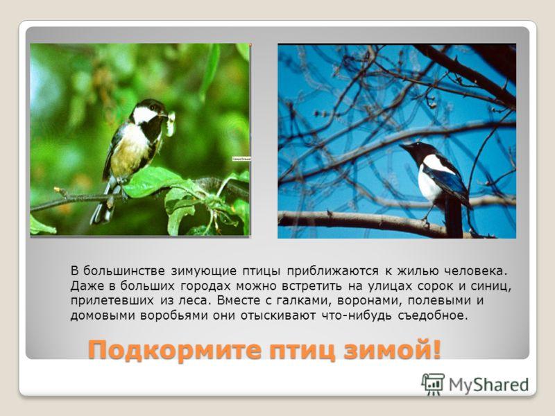 Подкормите птиц зимой! Подкормите птиц зимой! В большинстве зимующие птицы приближаются к жилью человека. Даже в больших городах можно встретить на улицах сорок и синиц, прилетевших из леса. Вместе с галками, воронами, полевыми и домовыми воробьями о