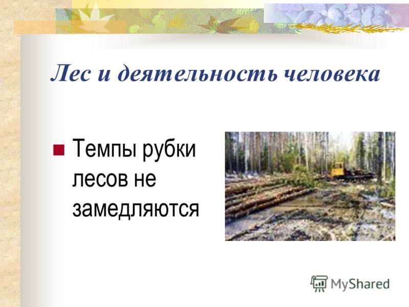 Лес и деятельность человека Темпы рубки лесов не замедляются
