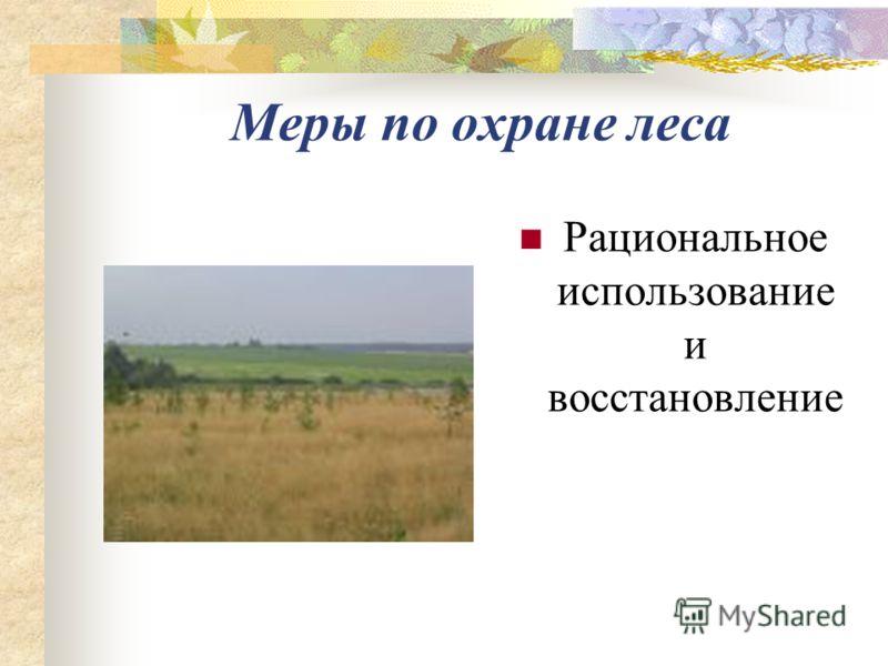 Меры по охране леса Рациональное использование и восстановление