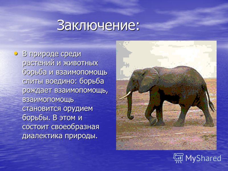 Заключение: Заключение: В природе среди растений и животных борьба и взаимопомощь слиты воедино: борьба рождает взаимопомощь, взаимопомощь становится орудием борьбы. В этом и состоит своеобразная диалектика природы. В природе среди растений и животны