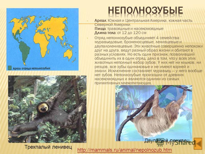 Ареал: Южная и Центральная Америка, южная часть Северной Америки. Пища: травоядные и насекомоядные Длина тела: от 12 до 120 см Отряд неполнозубые объединяет 4 семейства: муравьедовые, броненосцевые, ленивцевые и двупалоленивцевые. Эти животные соверш