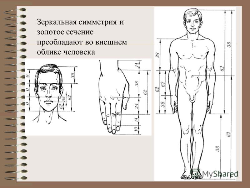 Билатеральная симметрия человеческого тела (речь идёт о внешнем облике и строении скелета). Эта симметрия всегда являлась и является основным источником нашего эстетического восхищения хорошо сложенным человеческим телом. Наша собственная зеркальная