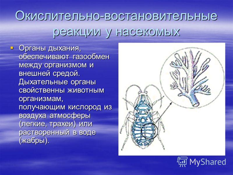 Окислительно-востановительные реакции у насекомых Органы дыхания, обеспечивают газообмен между организмом и внешней средой. Дыхательные органы свойственны животным организмам, получающим кислород из воздуха атмосферы (легкие, трахеи) или растворенный