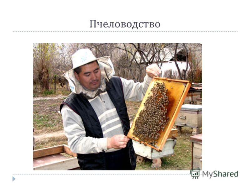Значение одомашненных насекомых в