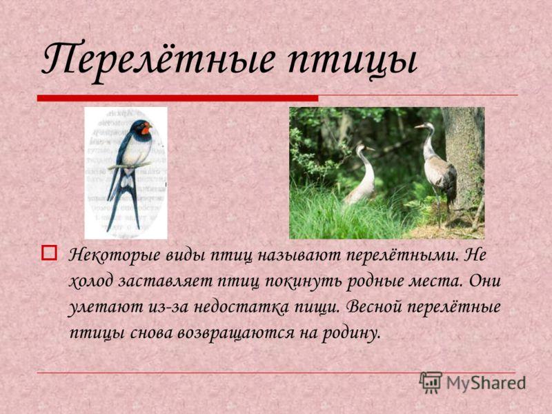Перелётные птицы Некоторые виды птиц называют перелётными. Не холод заставляет птиц покинуть родные места. Они улетают из-за недостатка пищи. Весной перелётные птицы снова возвращаются на родину.