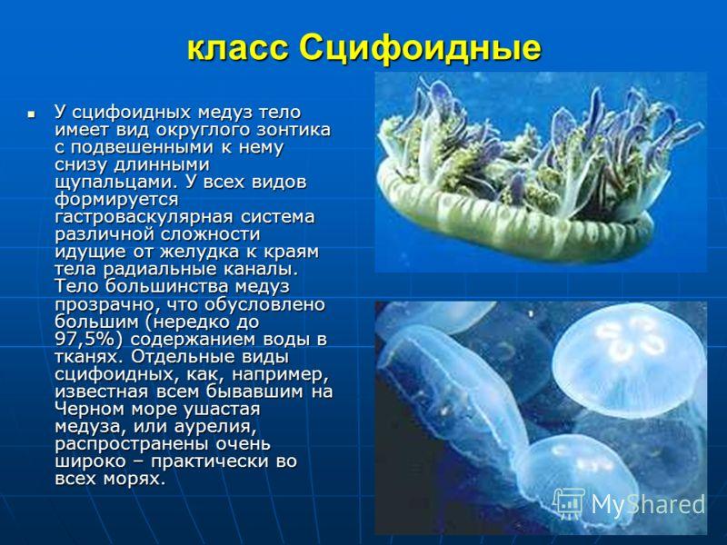 Схема стенки тела гидры: 1 чувствительная клетка, 2,3стрекательные клетки, 4промежуточные клетки, 5 нервная клетка, 6эпителиально-мускульная клетка, 7 железистая клетка, 8 энтодерма, 9 базальная мембрана, 10 эктодерма