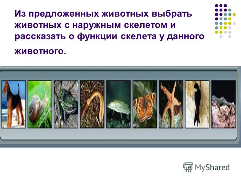 Из предложенных животных выбрать животных с наружным скелетом и рассказать о функции скелета у данного животного.