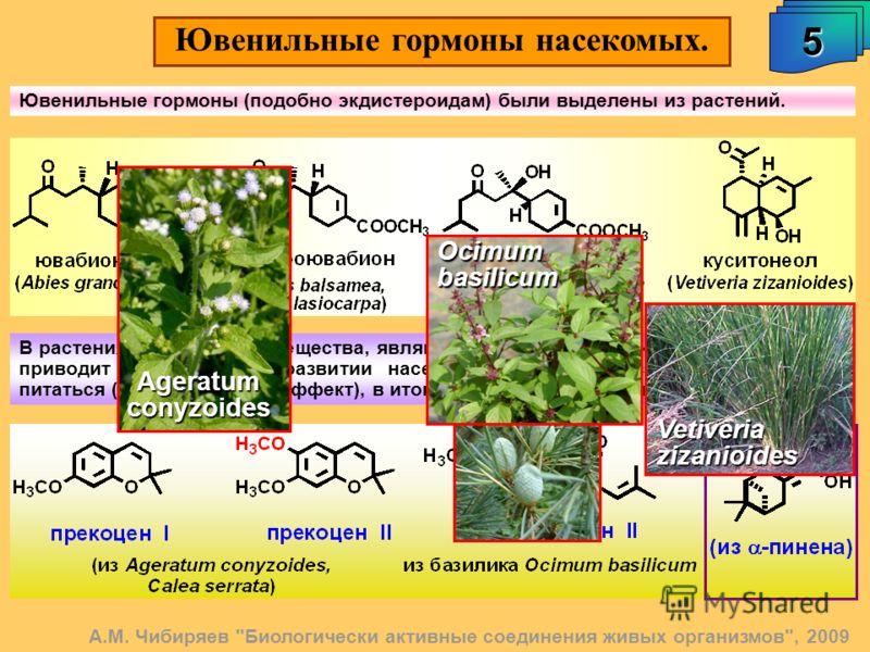 5 А.М. Чибиряев