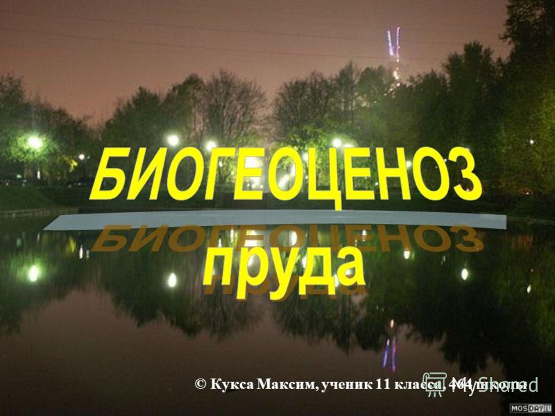 © Кукса Максим, ученик 11 класса, 464 школы