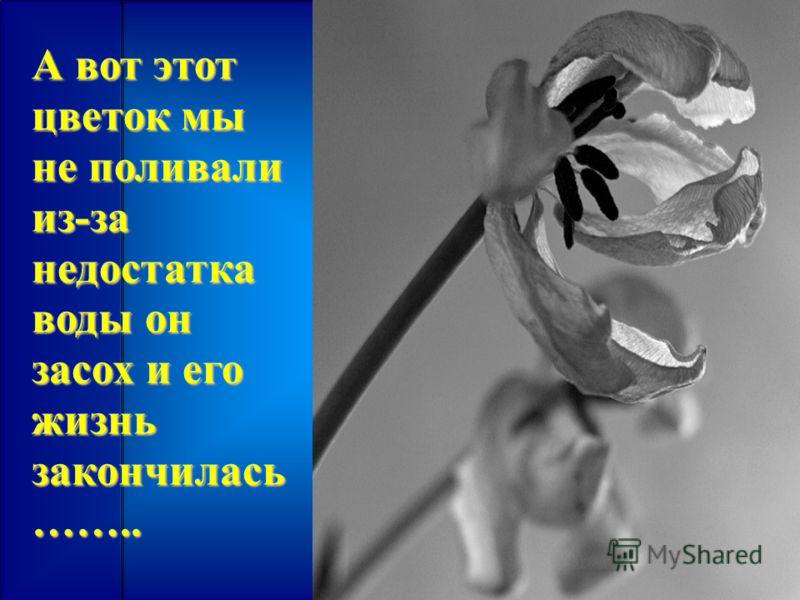 А вот этот цветок мы не поливали из-за недостатка воды он засох и его жизнь закончилась ……..