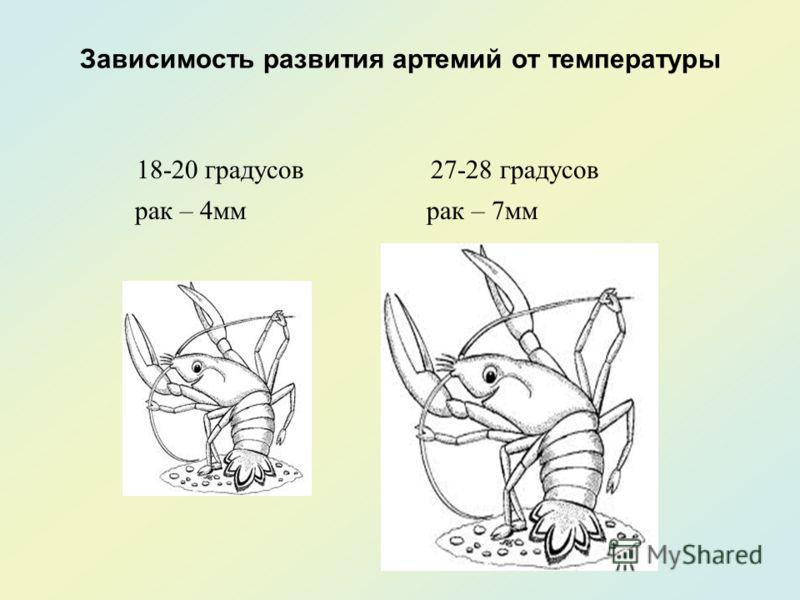 Зависимость развития артемий от температуры 18-20 градусов 27-28 градусов рак – 4мм рак – 7мм