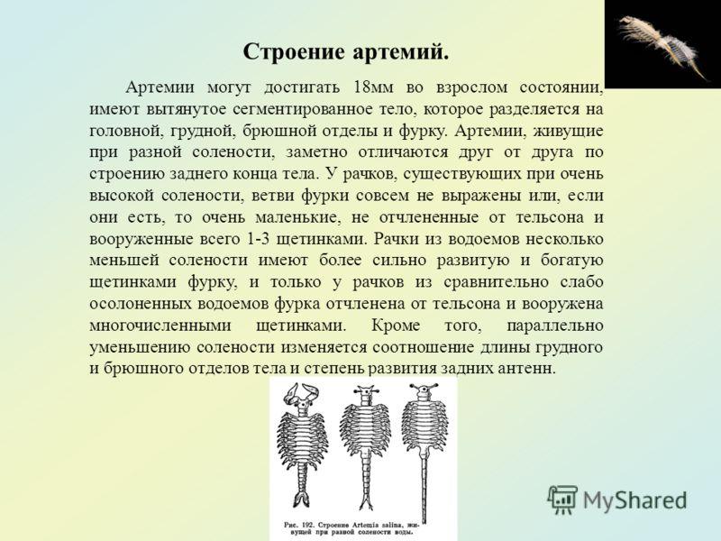 Строение артемий. Артемии могут достигать 18мм во взрослом состоянии, имеют вытянутое сегментированное тело, которое разделяется на головной, грудной, брюшной отделы и фурку. Артемии, живущие при разной солености, заметно отличаются друг от друга по