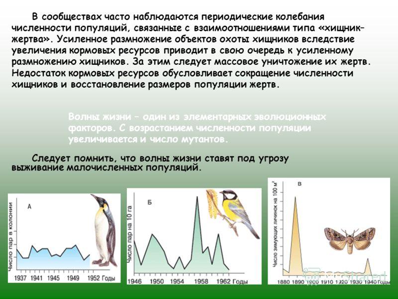 В сообществах часто наблюдаются периодические колебания численности популяций, связанные с взаимоотношениями типа «хищник– жертва». Усиленное размножение объектов охоты хищников вследствие увеличения кормовых ресурсов приводит в свою очередь к усилен