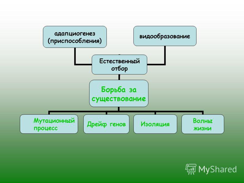Борьба за существование Мутационный процесс Дрейф геновИзоляцияВолны жизниЕстественный отбор видообразование адапциогенез (приспособления)