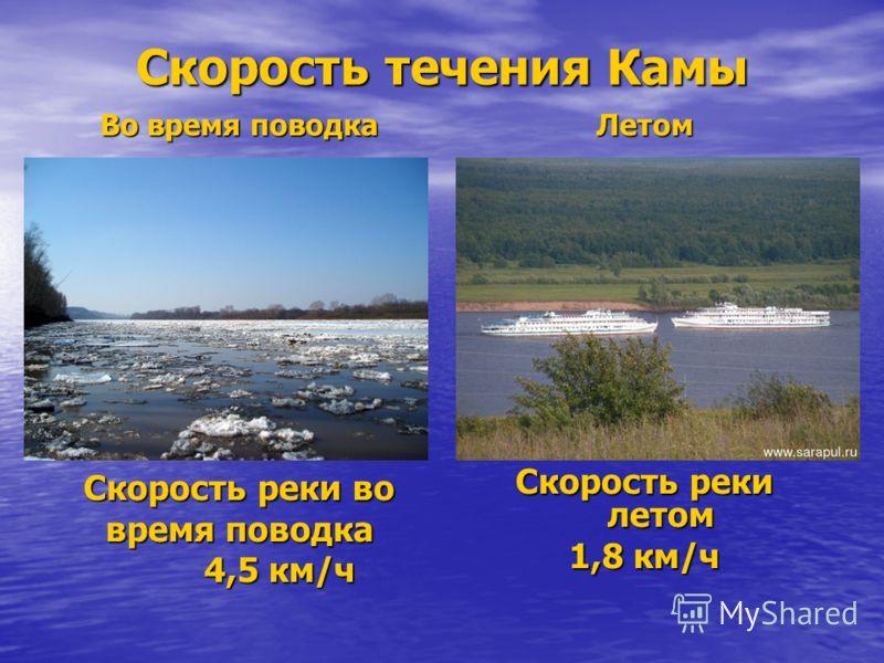 Скорость течения Камы Во время поводка Скорость реки во время поводка 4,5 км/ч 4,5 км/чЛетом Скорость реки летом 1,8 км/ч
