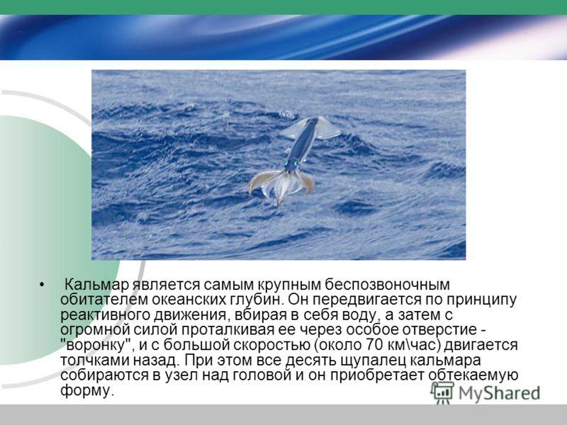Кальмар является самым крупным беспозвоночным обитателем океанских глубин. Он передвигается по принципу реактивного движения, вбирая в себя воду, а затем с огромной силой проталкивая ее через особое отверстие -