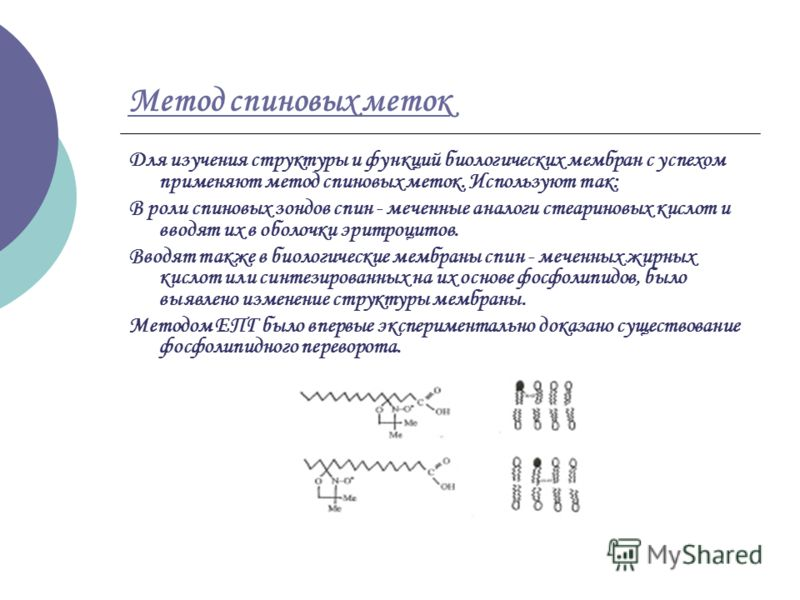 Метод спиновых меток Для изучения структуры и функций биологических мембран с успехом применяют метод спиновых меток. Используют так: В роли спиновых зондов спин - меченные аналоги стеариновых кислот и вводят их в оболочки эритроцитов. Вводят также в