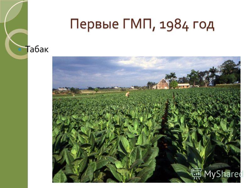 Первые ГМП, 1984 год Табак