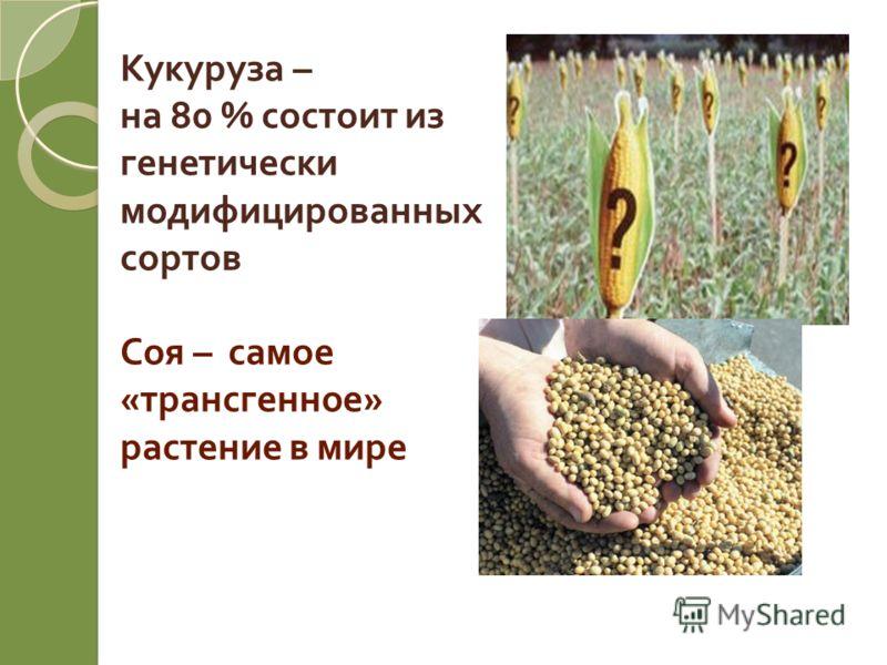 Кукуруза – на 80 % состоит из генетически модифицированных сортов Соя – самое « трансгенное » растение в мире