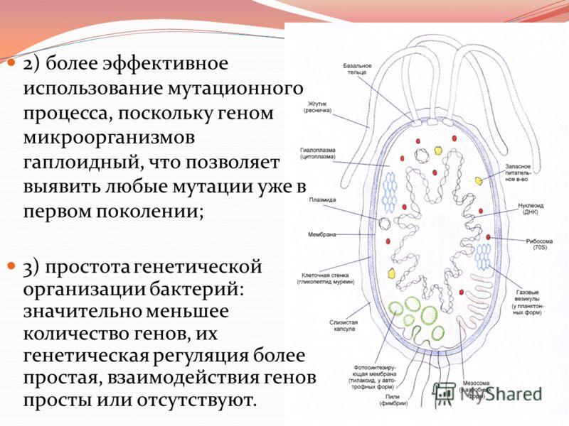 какие организмы являются паразитами росянка божья коровка