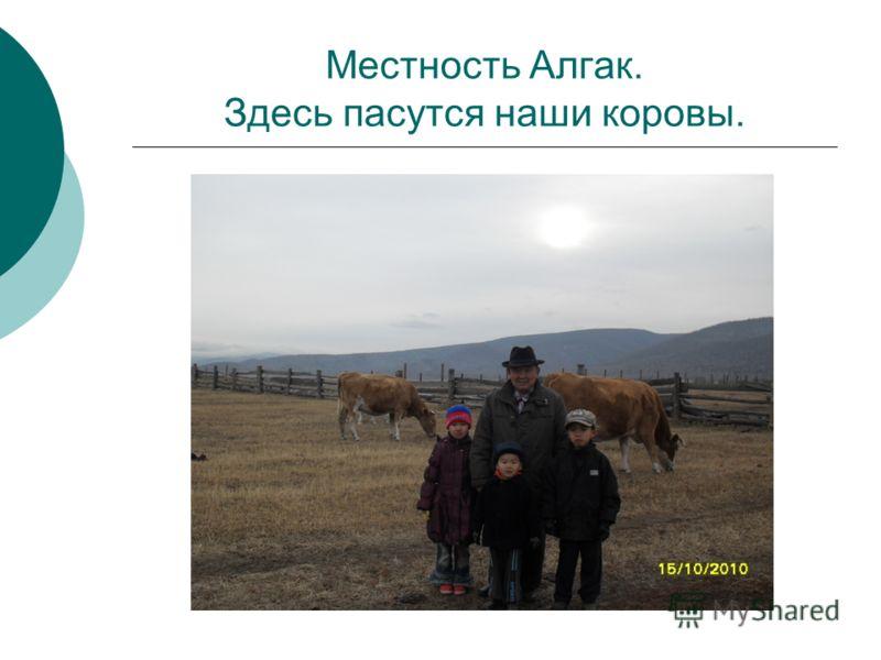 Местность Алгак. Здесь пасутся наши коровы.