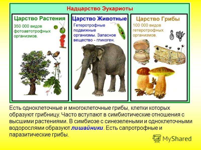 Есть одноклеточные и многоклеточные грибы, клетки которых образуют грибницу. Часто вступают в симбиотические отношения с высшими растениями. В симбиозе с синезелеными и одноклеточными водорослями образуют лишайники. Есть сапротрофные и паразитические