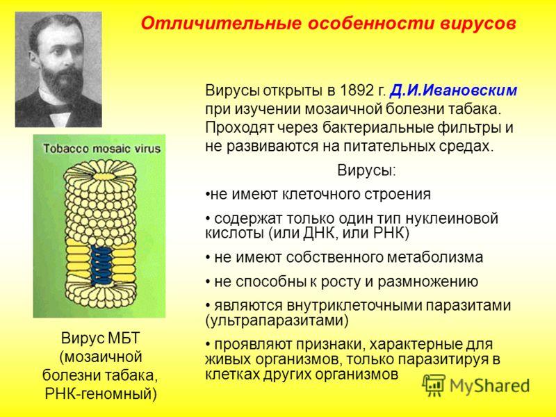 Отличительные особенности вирусов Вирусы открыты в 1892 г. Д.И.Ивановским при изучении мозаичной болезни табака. Проходят через бактериальные фильтры и не развиваются на питательных средах. Вирусы: не имеют клеточного строения содержат только один ти