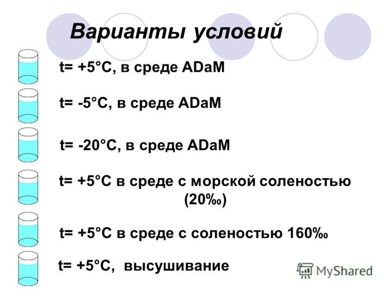 Варианты условий t= +5°С, в среде ADaM t= -5°С, в среде ADaM t= -20°С, в среде ADaM t= +5°С в среде с морской соленостью (20) t= +5°С в среде с соленостью 160 t= +5°С, высушивание
