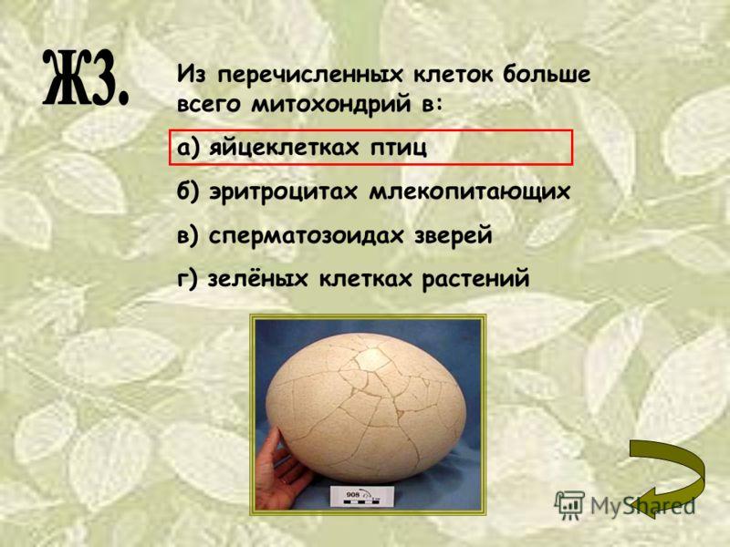 Из перечисленных клеток больше всего митохондрий в: а) яйцеклетках птиц б) эритроцитах млекопитающих в) сперматозоидах зверей г) зелёных клетках растений