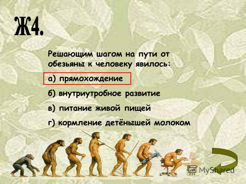 Решающим шагом на пути от обезьяны к человеку явилось: а) прямохождение б) внутриутробное развитие в) питание живой пищей г) кормление детёнышей молоком